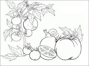 Раскраска «Овощи-фрукты»