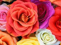 Оптом цветы